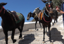 International donkey outrage in Santorini: New PETA video shows animals being abused as taxi cabs