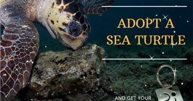 Special Christmas Present Alert – Adopt a Sea Turtle?