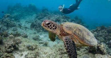 Wildlife Sense Kefalonia were featured in top 7 best sea turtle conservation projects to volunteer with