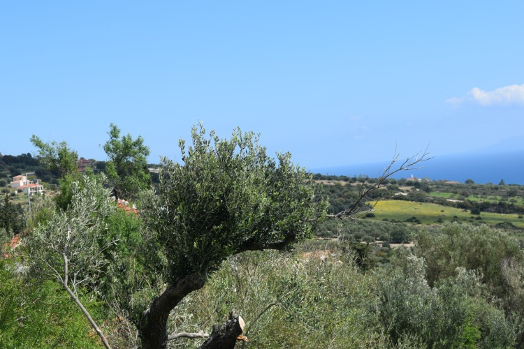 Real view of Olive Grove villa will be sited in